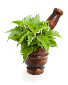 homeopathy-nettles